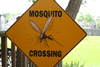 Thumb_mosquito-crossing-1540616